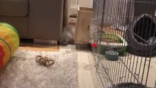 Bunny rabbit catches a case of the zoomies