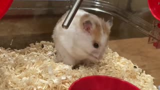 Really funny!!!! my hamster takes a shower