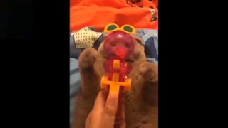 cutest pets ever you cant help but laugh