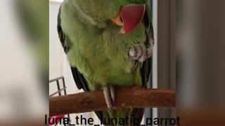 Talking Parrot Adorably Makes Kissing Noises