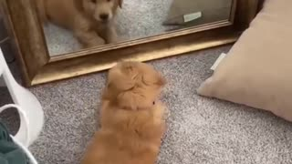 I love when they look into mirrors