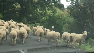 Traffic Jam New Zealand Style