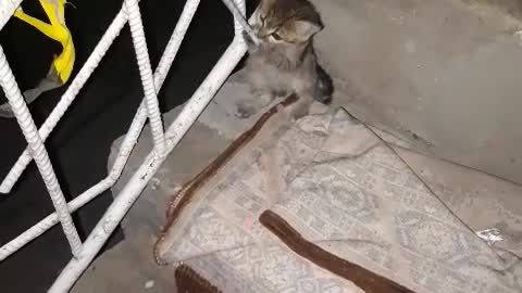 Funny video with cat🐱