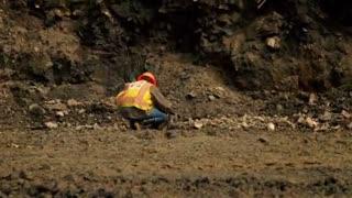 Gold Rush: Bedrock Gold Surprise