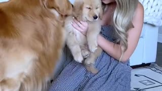 Dog welcomes son home so emotionally