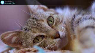 1 Tips for Taking Care of Your Cat