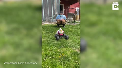 Disabled Duck Gets Monster Quad Wheelchair