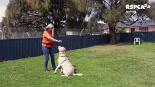 Guard Dog training funny