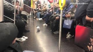 Pigeon walking around inside subway train