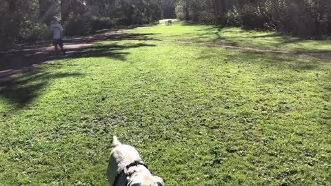 Out of leash and back training