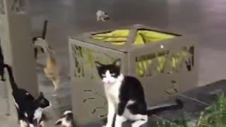 Watch cats pretend