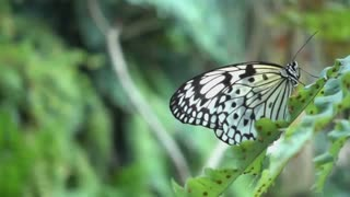 Love is like two butterflies together