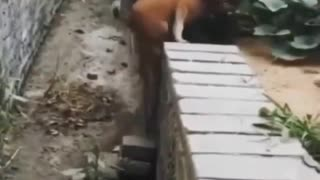 Dog teaches lesson in humanity