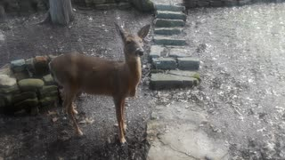 Whitetail Deer: Chatting With My Favorite Deer