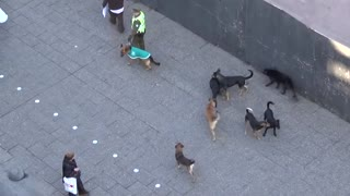 Must See Police Dog Attacked By Pack Of Stray Dogs