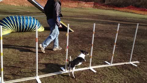 2015 June Scraps the Dog Agility Practice