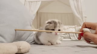 Cute kitten don't know how to pass through