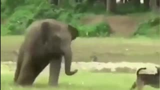 Adorable Baby Elephant Plays With Dog