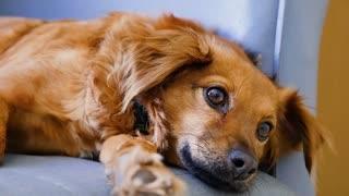 Beautiful eye dogs