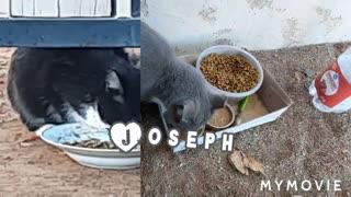 Rain Day Feral Cat Feeding