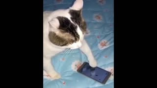 Cat plays a mobile game then gets angry