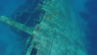 Surprise Diving Discovery