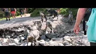 Switzerland Travel Video