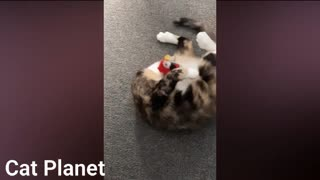 playing funny cats video compilation