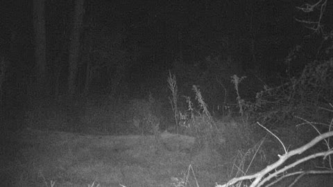 Huge 10 point buck lurking in the shadows