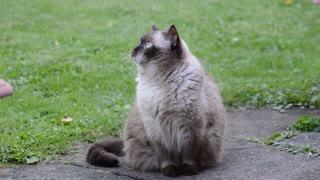 Kitty Angle Eye Follows Birds In Garden