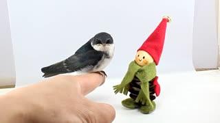 so cute bird