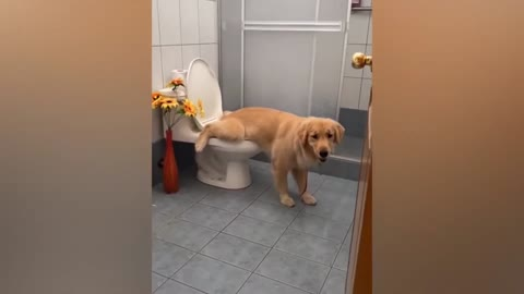 FUNNY ANIMALS REACTIONS