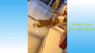 Funny moments animals