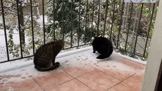 Hero and Lisa experience their 1st Snow!