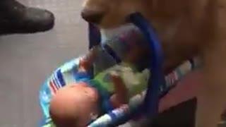 Graban a un perrito de la policía robando los juguetes que donarían a niños en Navidad