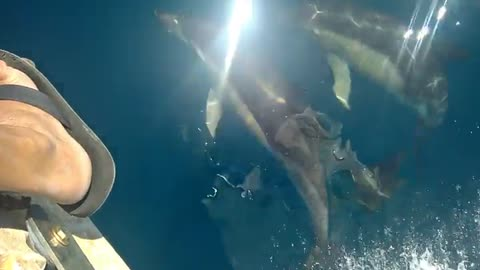 Dolphins Playfully Swim Next to Person on Boat