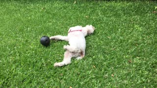 Dogs Relaxing and playing