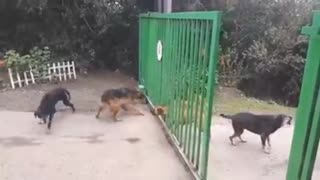 Angry Dogs Don't Actually Want to Fight