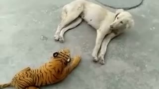 The animal funny look this