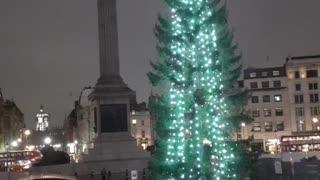 Christmas tree Trafalgar