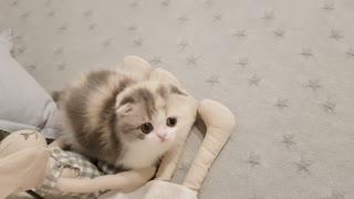 The beautiful cat cute