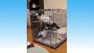 Funny Cats and Dogs Enjoy Being Mischievous