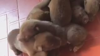 Congratulation! Seven lovely babies born