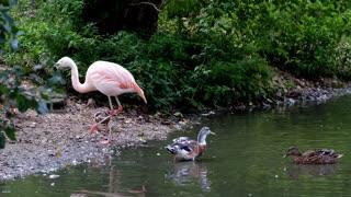 Wonderful Flamingo
