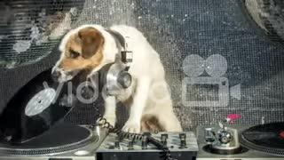Dog DJ dogs
