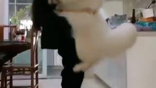 Funny animals. Dog and Girl