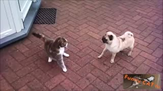 other For The First Time Cats and Dogs Meeting Each