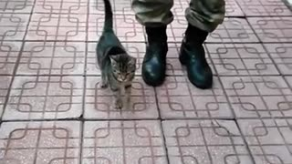 Cute little military kitty cat reporting for duty sir