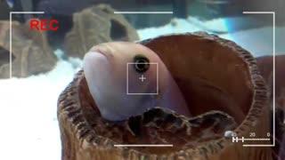 My Curious Aquarium Fish