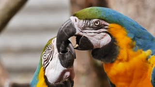 Beautiful parrots, smart birds